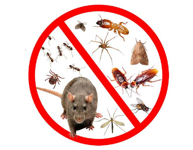 Control de plagas, Desinsectación y desratización
